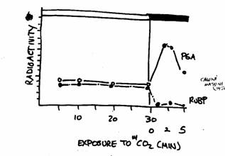 a comparison of c3 and c4 plants in response to photosynthesis and photorespiration How do plants avoid photorespiration  compare prices and book online always free  how do c3, c4 and cam avoid photorespiration.